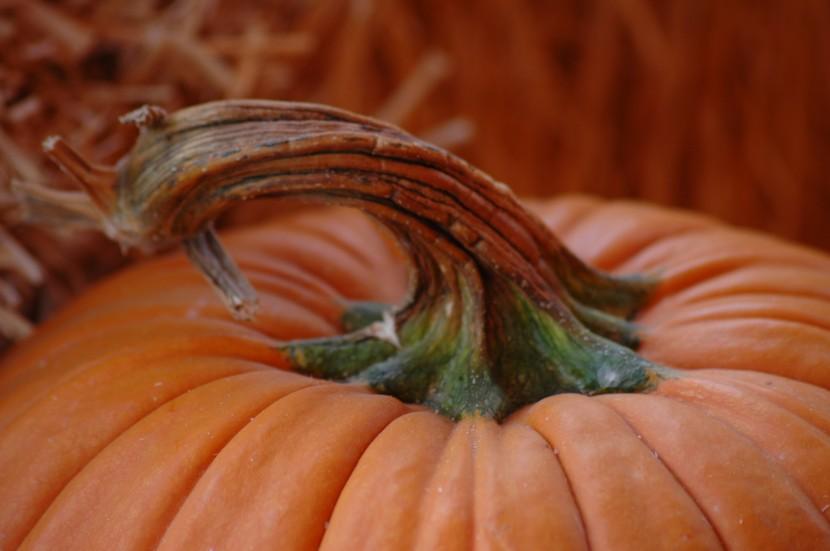 Gesund mit Kürbis – Willkommen lieber Herbst!