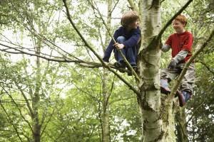 Zwei Jungs auf einem Baum
