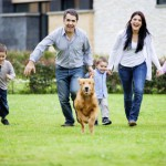 Familienzuwachs: Wie aus Baby und Hund dicke Freunde werden