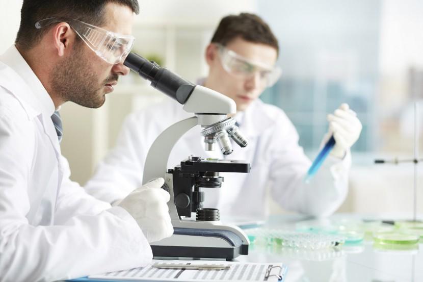 Forschung mit Stammzellen – ein Überblick