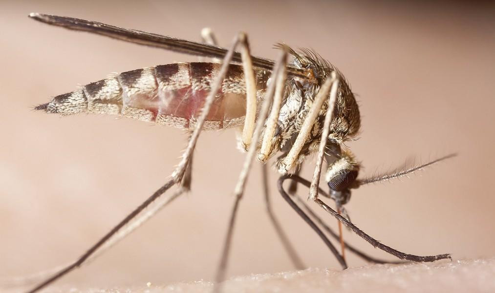 Schwangerschaft: Das sollten Sie über das Zika-Virus wissen