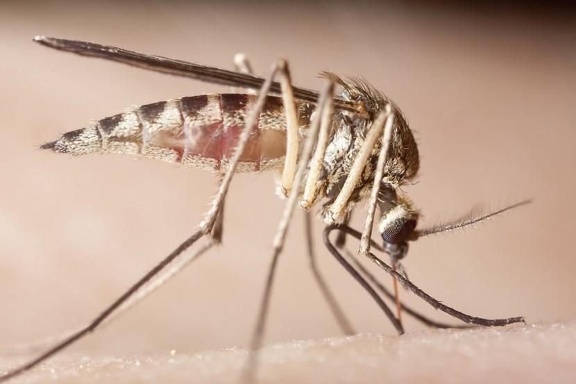 Schwangerschaft und Zika-Virus