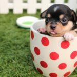 Tipps für ein tierisch sicheres Zuhause