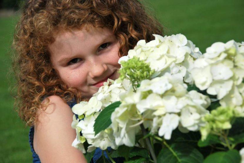 Hortensien als leuchtende Geschenkidee zum Muttertag