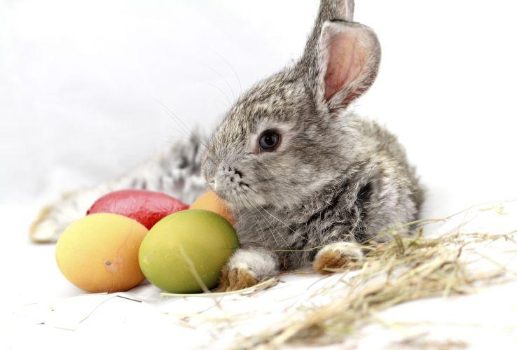 Warum der Glaube an den Osterhasen wichtig ist
